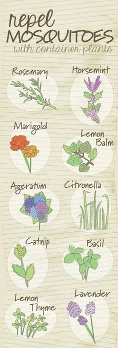Diagrams That Make Gardening So Much Easier The top 10 container plants that repel mosquitoes naturally.The top 10 container plants that repel mosquitoes naturally. Diy Garden, Lawn And Garden, Dream Garden, Garden Landscaping, Landscaping Ideas, Patio Ideas, Backyard Ideas, Backyard Plants, Balcony Ideas