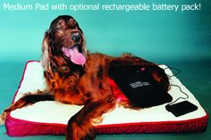 Canine Light Therapy Products
