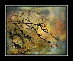 http://fineartamerica.com/featured/sparrows-winter-night-barbara-chichester.html