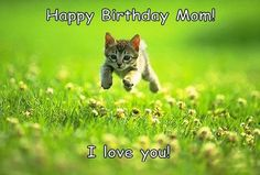 Pocket: 100 Ultimate Funny Happy Birthday Meme's
