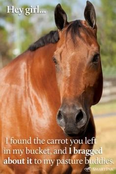 valentine from my horse