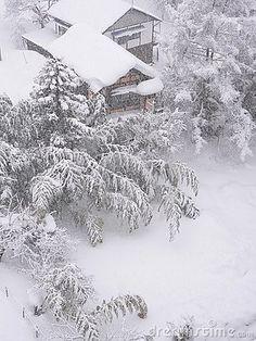 Bamboo garden under the heavy snow with small japanese house, Japan. © Yuryz