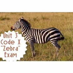 Product: Multiple Choice Assessment and Answer Key This Omega English product contains a 33 multiple choice assessment on the short story Zebra by Chaim Potok.  Questions are text dependent and range from comprehension to text analysis.  Dont forget to follow my store, Omega English , for more great lessons, bundles, and free monthly downloads!All Omega English products are teacher and student tested.