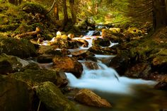 Mountain Stream In Forest  (from public domain)