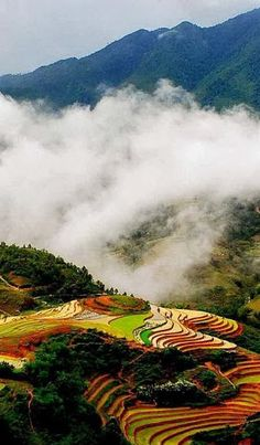 #Sapa #rice_terraces #Vietnam http://en.directrooms.com/hotels/subregion/1-15-168/