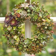 BHG:  Step 1... It's easy to mix succulents in an array of types and colors to craft an eye-pleasing tableau of textures and hues. Our step-by-step instructions start with a ready-made sphagnum moss wreath. You can also purchase a wire form and sphagnum moss liner separately.