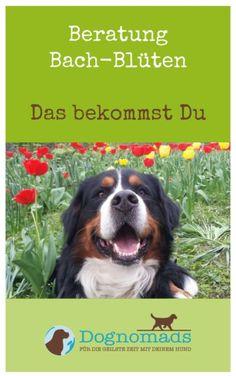 Hundebeschäftigung - Gummihupf mit Joghurtbecher - Gummihupf mit Joghurtbecher Star Of Bethlehem, Pup, Stars, Dogs, Animals, Tricks, Dog Things, Remove Ticks, Separation Anxiety Disorder