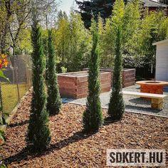 """144 kedvelés, 2 hozzászólás – SD KERT - Spiegel Ákos (@topgarden) Instagram-hozzászólása: """"#leylandi #gardening #kertépítés #kerttervezés #garten #landscape #kert #garden #fenyokereg…"""" Land Scape, Firewood, Vineyard, Outdoor, Instagram, Lawn And Garden, Outdoors, Woodburning, Vine Yard"""