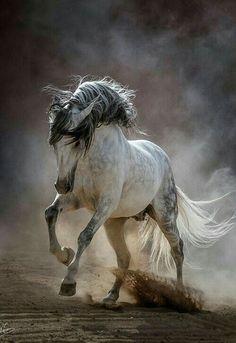 - Art Of Equitation Cute Horses, Pretty Horses, Horse Love, Cute Horse Pictures, Horse Photos, Majestic Horse, Majestic Animals, Most Beautiful Horses, Animals Beautiful