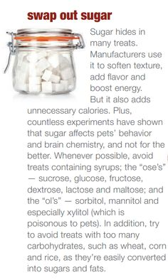 Simple tips to avoid excess sugar in your pet's diet