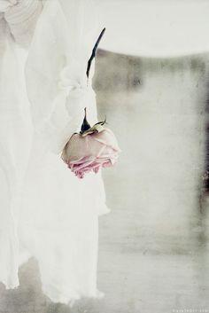/♪♪ლ(╹◡╹)ლ♪♪ ~Each fairy breath of summer, as it blows with loveliness, inspires the blushing rose. ~~ Author Unknown ~~ X ღɱɧღ