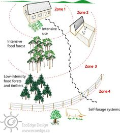 The Goals of Permaculture Edible Plants, Edible Garden, Google Design, Forest Garden, Urban Homesteading, Garden Boxes, Plantation, Aquaponics, Sustainable Living