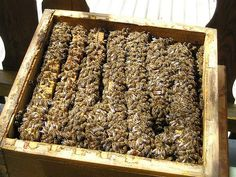 A typical honey bee hive can make up to 400 pounds of honey per year.