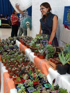 Las mejores suculentas mexicanas para tu casa y jardín | Fabi Maravilla