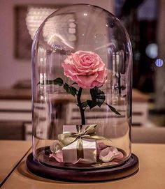 Beauty and The Beast Enchanted Rose Glass Dome LED Romantic Christmas Gift Decor for sale online Enchanted Rose, Forever Rose, Jolie Photo, Romantic Gifts, Real Beauty, Pink Aesthetic, Glass Domes, Pretty In Pink, Flower Arrangements