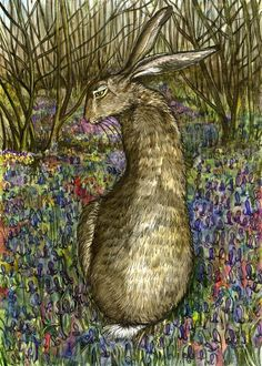 The Curious Hare - HARE - Elle Wilson