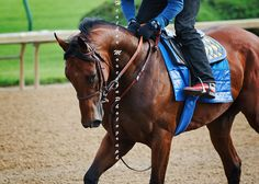 American Pharoah 3 |   www.abounaderphoto.com
