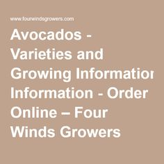 Avocados - Varieties and Growing Information - Order Online – Four Winds Growers