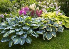 Shade Garden, Garden Plants, Plantation, Flower Beds, Garden Inspiration, Beautiful Gardens, Garden Landscaping, Landscaping Ideas, Garden Design