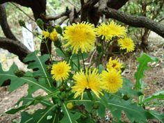Flores da Madeira ~ FESTA DA FLOR - MADEIRA