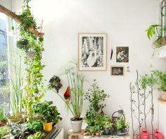 Urban jungle planten verzameling