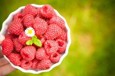 The berry picking farms are open! The wonderful fresh fruit of the season has arrived. Get out there and get some strawberries, raspberries and blueberries.