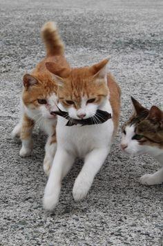 お魚くわえた野良猫 photohito.com - Full of cats ねこ軍団