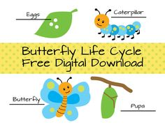 Free download of Butterfly Life Cycle. Pdf of the life cycle, and each individual cycle. If you find these helpful, please leave a comment to let me know how you used them. Terms of Use Free to us...