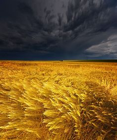 Field during a thunder storm. awesome color contrast
