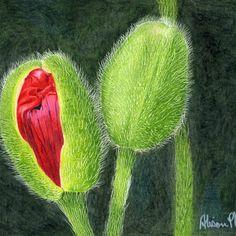 Ready to Burst Floral Flowers, Cactus Plants, Art, Cactus, Kunst, Art Education, Artworks