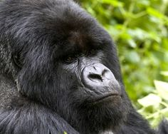 It's not just food in this book — there are gorillas, too. Lots of them. Get your hands on Evertaster on June 14.