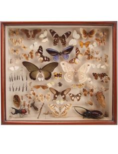 A cased diorama of various crawling insects and butterflies.… - Natural History - Industry Science & Technology - Carter's Price Guide to Antiques and Collectables
