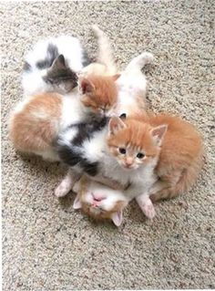 Bundle of kittens !! I love the very bottom one. Not a care in the world.