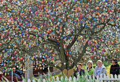Easter apples in Saalfeld, German