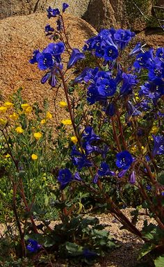 Conservation - California Native Plant Society