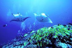 Explore the house reef of OBLU by Atmosphere at Helengeli #bmrtg #Maldives #oblubyatmospherebyhelengeli #indianocean #bestvacations #WorldTravelGuide #LalumiTravels #warrenjc #livetravelchannel #sunnysideoflife #maldivity #travel #traveling #vacation #dive #surfing #adventureculture #instagood #holiday #lagoon #beach #instapassport #instatraveling #mytravelgram #travelgram #igtravel #CrystalClearWater #LonelyPlant #adventureculturenature