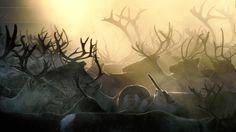 Reindeer roundup| VisitFinland.com