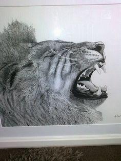 Lion.  Wildlife pen and ink drawing . Yvonnemayartist.co.uk