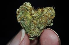 Can you feel the love?  #weed #cannabis #pot   I ♥ HEART NUGS