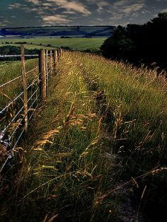 ~Walking the downs, Devon, England~