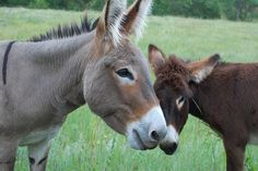 donkeys...what a gorgeous face this one has and the little one oh my heart strings