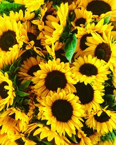 Pin by sierra on oh the places you'll go in 2019 подсолнухи, Sunflower Bouquets, Sunflower Flower, Yellow Sunflower, Beautiful Flowers Garden, Pretty Flowers, Purple Flowers, Sunflower Iphone Wallpaper, Dont Touch My Phone Wallpapers, Different Kinds Of Art