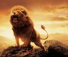 Promotional Art Of Aslan Roaring For The Chronicles Narnia