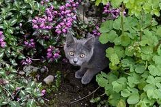 Cute cat pics of cats enjoying gardens. You Found Me, Grey Kitten, Cat Garden, Haha Funny, Great Pictures, Kittens Cutest, Beautiful Images, Garden Sculpture, Kitty