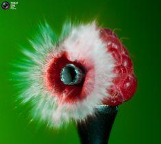 "High Speed Photography by Lex Augusteijn. Lex Augusteijn is an amateur Dutch photographer specialising in high-speed photography. He says: ""The images are Macro Photography Tips, High Speed Photography, Cool Pictures, Cool Photos, Amazing Photos, Artist Portfolio, Online Portfolio, Pretty Photos, Art Forms"