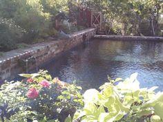 traditional-pool.jpg (640×480)