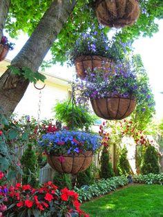 Jardines del patio trasero. Colgar las plantas de las ramas de los árboles .. Me encanta