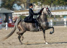saddleseat equitation