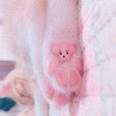 곰돌이네마리야옹이한마리 ###cat#고양이#냥스타그램#분홍분홍#발바닥 by mirae_s2 http://www.australiaunwrapped.com/