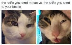 This duality: | 18 Cat Memes Literally Everyone Will Relate To